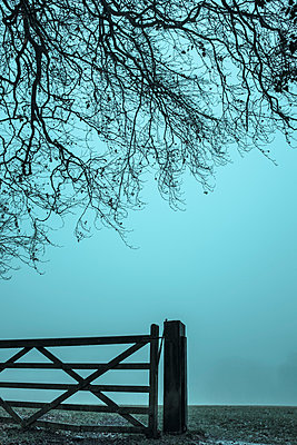 Wooden gate and tree - p1228m1203564 by Benjamin Harte