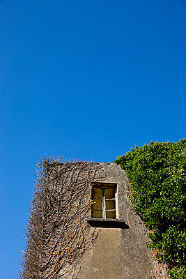 Ivy-covered tower - p248m853976 by BY