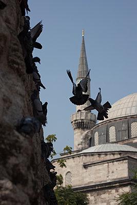 Tauben vor einer Moschee - p045m1486779 von Jasmin Sander