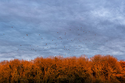Bird migration in autumn - p1057m2149467 by Stephen Shepherd