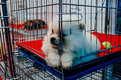 Hundemarkt, Bangkok - p1317m1149800 von teryoshi
