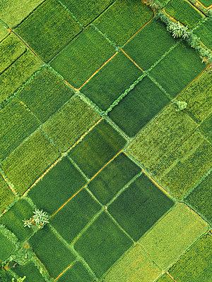 Indonesia, Bali, Keramas, Aerial view of rice fields - p300m2070204 by Konstantin Trubavin