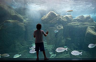 Caucasian boy leaning on aquarium tank watching swimming fish - p555m1232052 by Valeriya Tikhonova