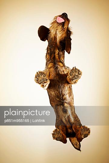 Dog - p851m955165 by Lohfink