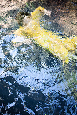 Woman in yellow dress in the lake - p1640m2259934 by Holly & John