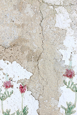 Flowers at the wall - p450m966232 by Hanka Steidle