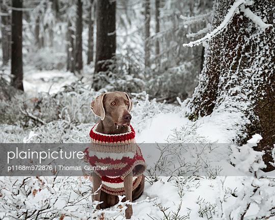 Winterpulli - p1168m972876 von Thomas Günther
