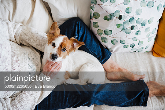 Jack Russell Terrier with senior woman sitting on sofa at home - p300m2265650 by Eva Blanco
