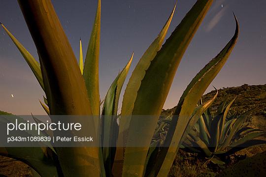 p343m1089839 von Peter Essick