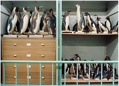 Pinguine - p1205m1020921 von Annet van der Voort