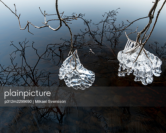 Ice on tree branches - p312m2299690 by Mikael Svensson