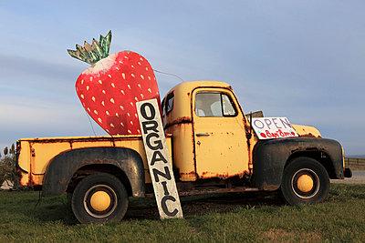 Strawberry farm - p0452859 by Jasmin Sander