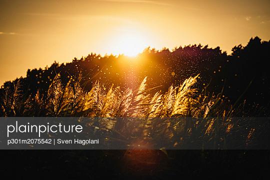 p301m2075542 von Sven Hagolani