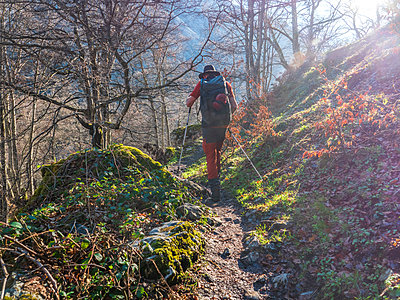 Spain, Asturia, Cantabrian Mountains, senior man on a hiking trip through the woods - p300m2103401 by Albrecht Weißer