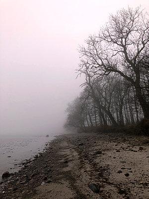Mist on the Baltic Sea beach - p382m2076709 by Anna Matzen