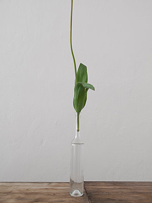 Tulip, Detail - p444m1041389 by Müggenburg