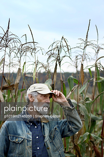 Sweet corn field and senior man - p1019m2148288 by Stephen Carroll