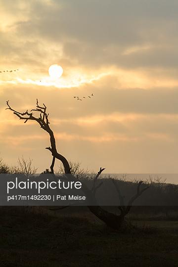 Dünenlandschaft - p417m1492230 von Pat Meise