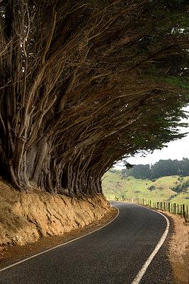 Winding road - p1154m1425708 by Tom Hogan