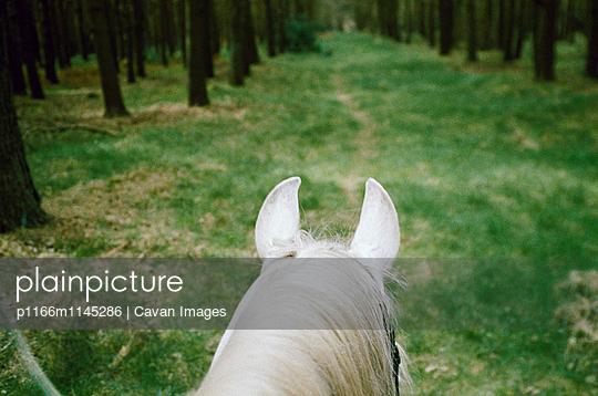 p1166m1145286 von Cavan Images