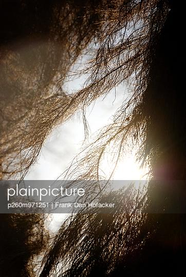 Roots - p260m971251 by Frank Dan Hofacker