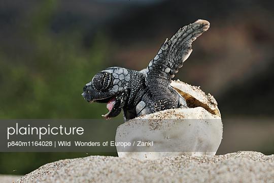 p840m1164028 von Wild  Wonders of Europe / Zankl
