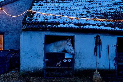 Pony im Stall - p567m1469200 von Ernesto Timor