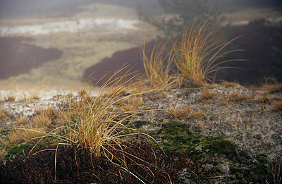 Duenengras - p9791335 von Opelka