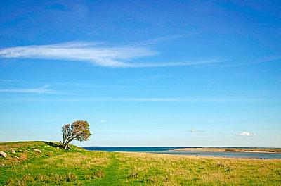 Tree by the sea - p382m2283245 by Anna Matzen