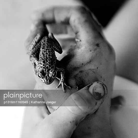 Matschige Hände halten einen kleinen Frosch , Borden, Western Australia, Australien - p1316m1160945 von Katharina Jaeger