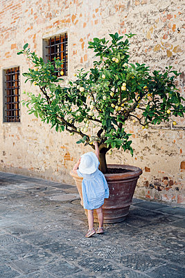 Girl reaching lemon on lemon tree - p312m1139922 by Malin Morner