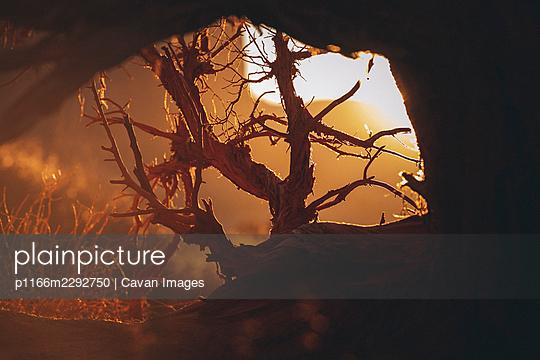 p1166m2292750 von Cavan Images