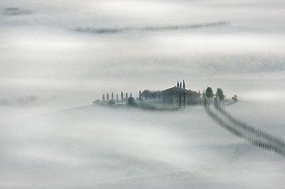 Morning Mist - p1256m2098934 by Sandra Jordan
