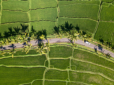 Indonesia, Bali, Ubud, Aerial view of rice fields - p300m2042696 by Konstantin Trubavin