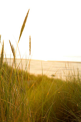Dutch coast - p5670678 by Olivier Foulon