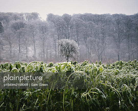 Early frost - p1549m2158069 by Sam Green