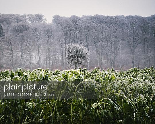 Früher Frost - p1549m2158069 von Sam Green