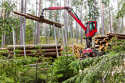 Stacking logs in forest - p312m2237194 by Thomas Adolfsén