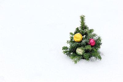 Mini-Weihnachtsbaum - p450m966228 von Hanka Steidle