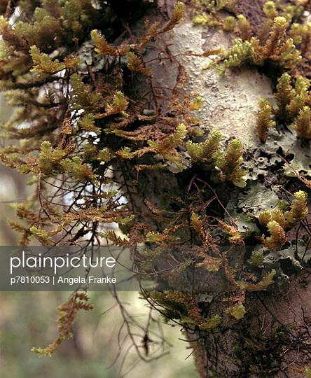 Moos und Rinde - p7810053 von Angela Franke