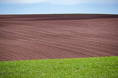Ploughed farmer's field on a low rolling hillside - p1057m2285950 by Stephen Shepherd