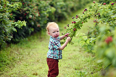 Side view portrait of cute baby boy with messy face eating fresh raspberries while picking it from plants on field - p1166m2112734 by Cavan Images
