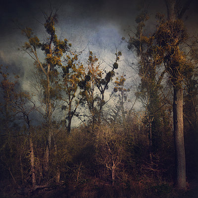 Darkland - p1633m2284237 by Bernd Webler