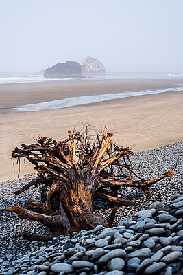 The tide is way out at Arch Cape Beach; Arch Cape, Oregon, United States of America - p442m2039288 by Robert L. Potts