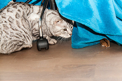 Cat and mouse - p7390741 by Baertels