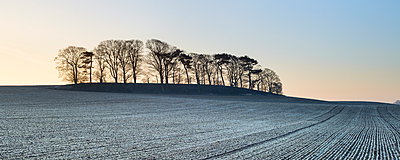 A small copse of trees growing on a drumlin in frosty dawn light, Boroughbridge, North Yorkshire, Yorkshire, England, United Kingdom, Europe - p871m895321 by Lizzie Shepherd