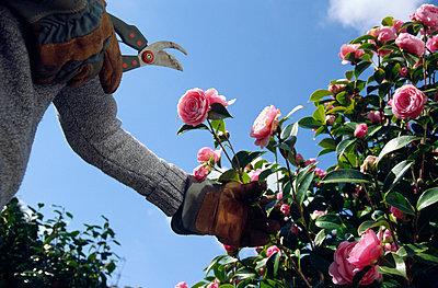 Garten in Quimper - p526m916521 von Stuart Paton