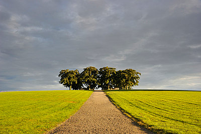 Dirt road leading to tree area - p575m696087 by Stefan Ortenblad