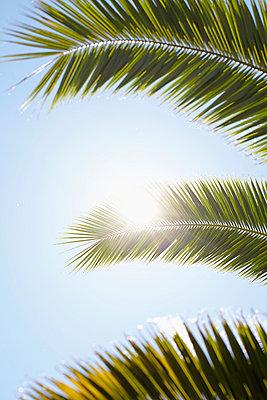 Urlaub unter Palmen - p464m1020159 von Elektrons 08