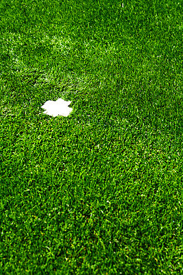 Cross on the lawn - p5880097 by Bjoern